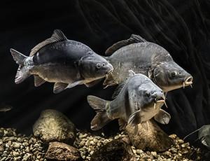 fot. Paweł Kucharski TRAVART.pl © Stawy Milickie